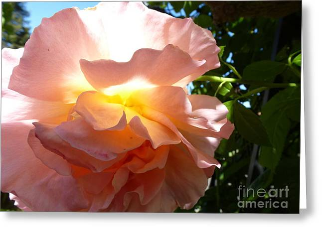 The Sun Within Greeting Card by Anat Gerards