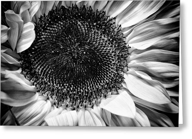 The Sunflower II Greeting Card by David Patterson