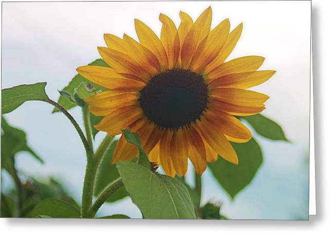 The Sunflower Greeting Card by Victoria Sheldon