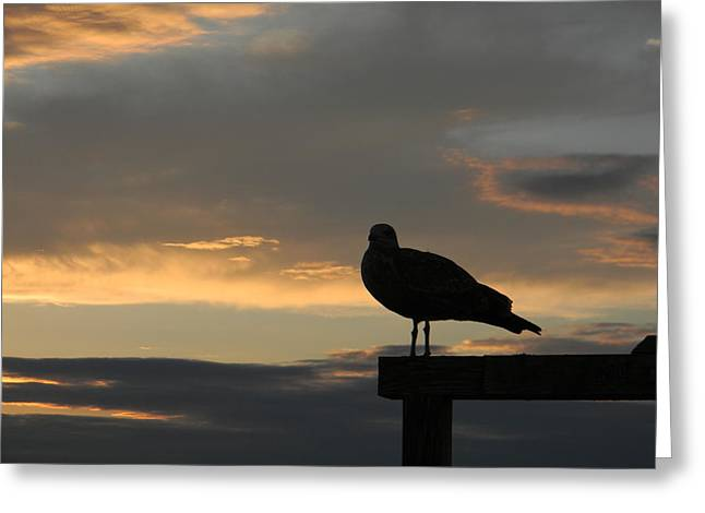 The Sunset Perch Greeting Card