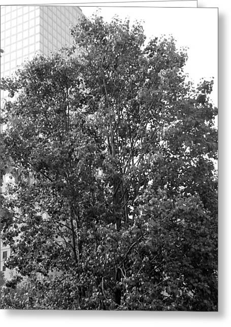 The Survivor Tree In Black And White Greeting Card by Rob Hans