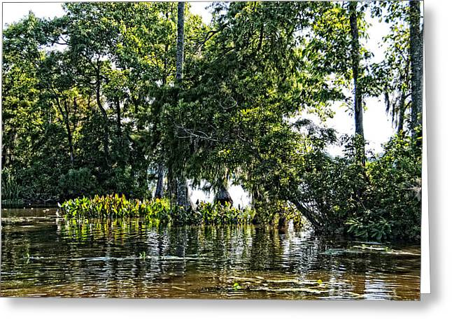 Greeting Card featuring the photograph The Swamp by Ralph Jones