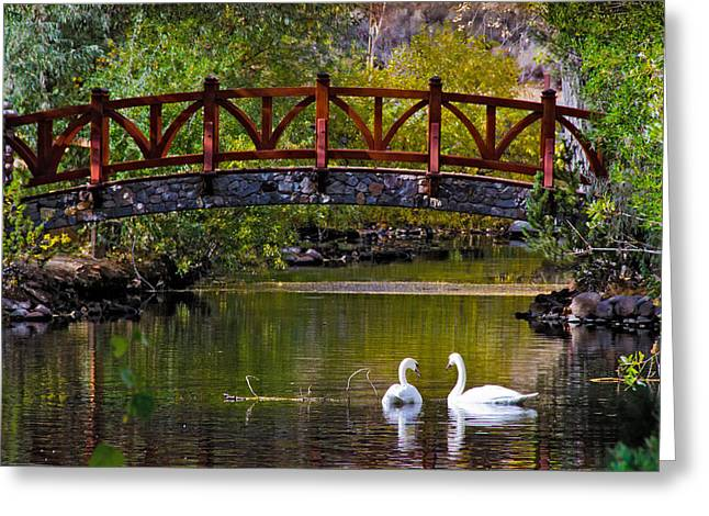 Greeting Card featuring the photograph The Swans At Caughlin Ranch by Janis Knight