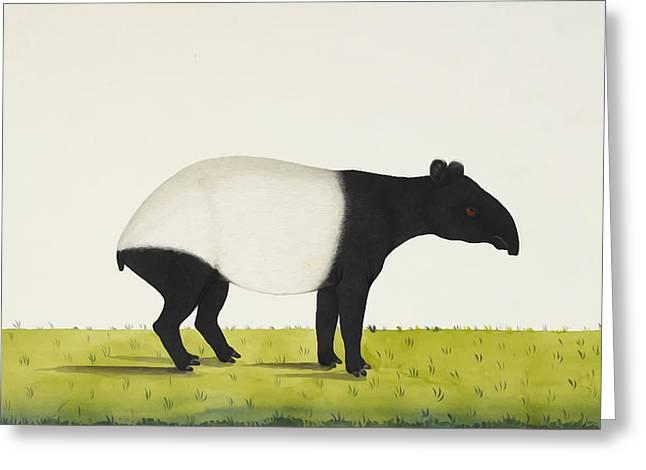 The Tapir Greeting Card