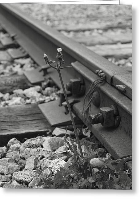 The Tenacity Of Nature Greyscale Greeting Card by MM Anderson