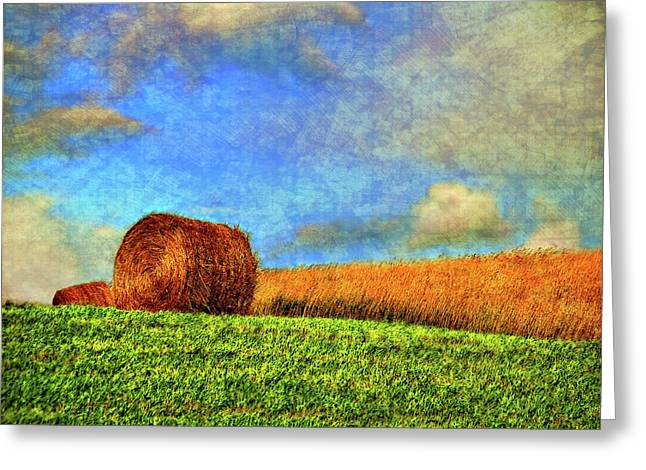 The Textures Of Autumn Greeting Card by Steve Harrington