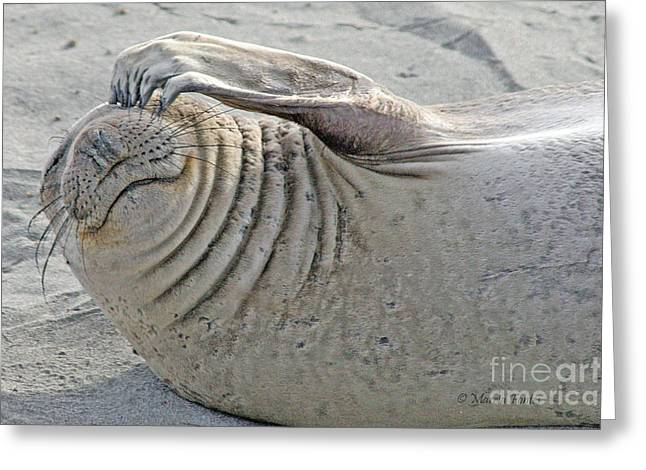 The Thinker - Elephant Seal On The Beach Greeting Card