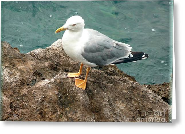 The Thinker - Seagull Photography By Giada Rossi Greeting Card