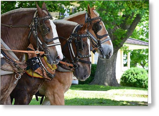 Greeting Card featuring the photograph The Three Amigos by Cathy Shiflett