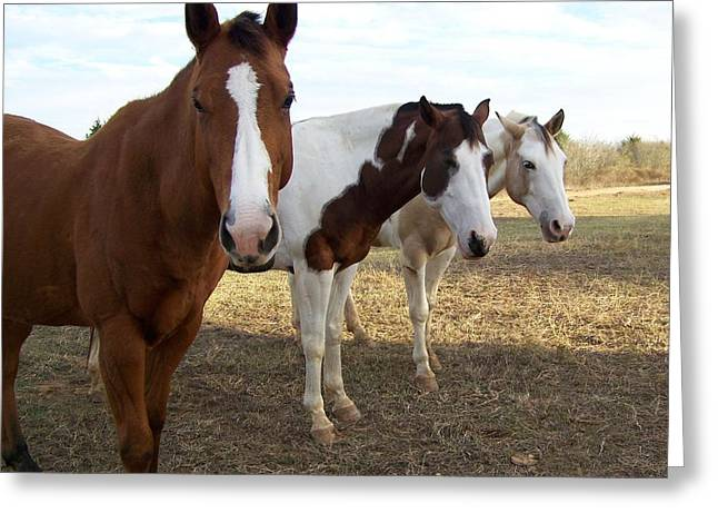 The Three Amigos Greeting Card by Cherie Haines
