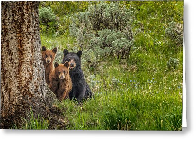 The Three Bears  Greeting Card