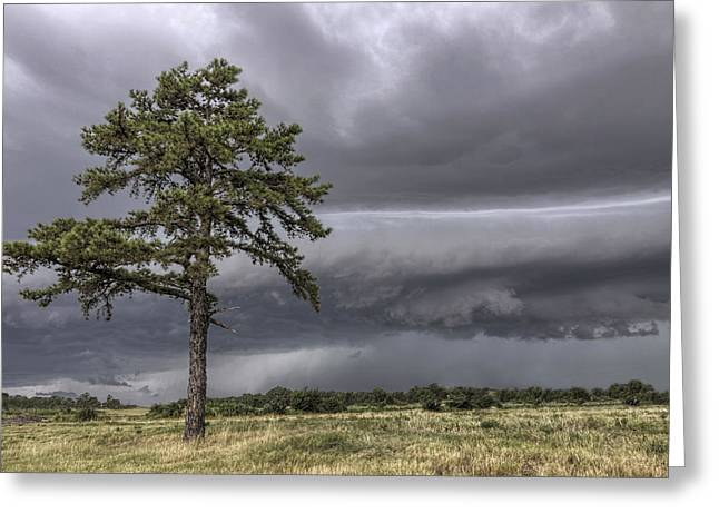 The Thunder Rolls - Storm - Pine Tree Greeting Card