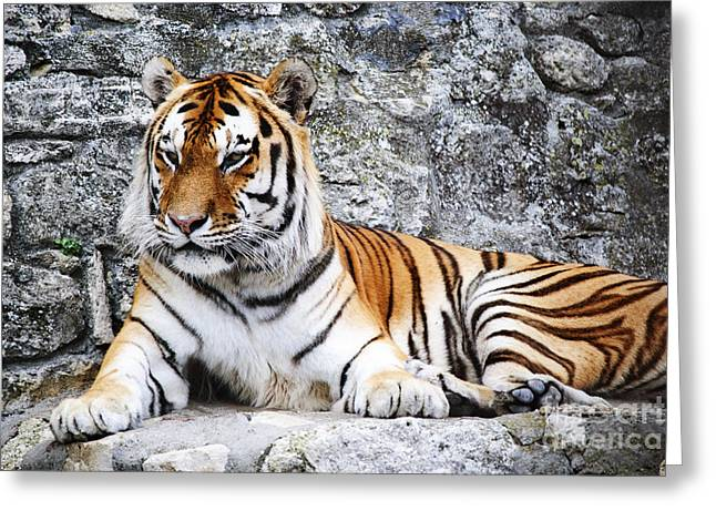 The Tiger Greeting Card by Jelena Jovanovic