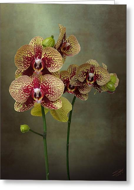 Timeless Orchid Greeting Card by IM Spadecaller