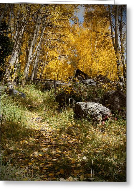 The Trail In Gold  Greeting Card by Meredith Mazutis
