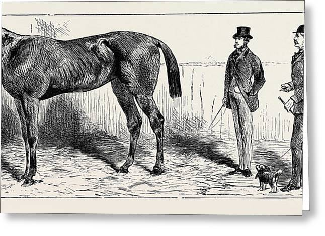 The Training Of A Racehorse At Home In The Stable Greeting Card