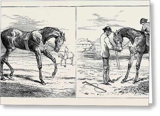The Training Of A Racehorse Breaking The Yearling Left Greeting Card