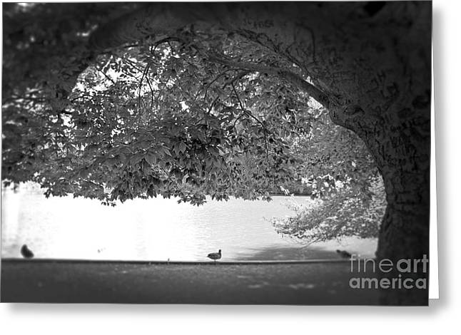 Greeting Card featuring the photograph The Tree At Mill Pond by Paul Cammarata