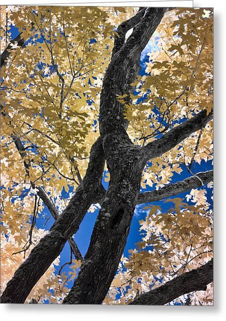 The Tree Greeting Card by David Stine