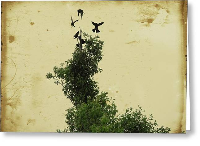 Crows Vying For Their Position In The Tree Greeting Card