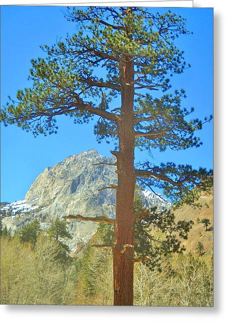 The Tree Greeting Card by Marilyn Diaz