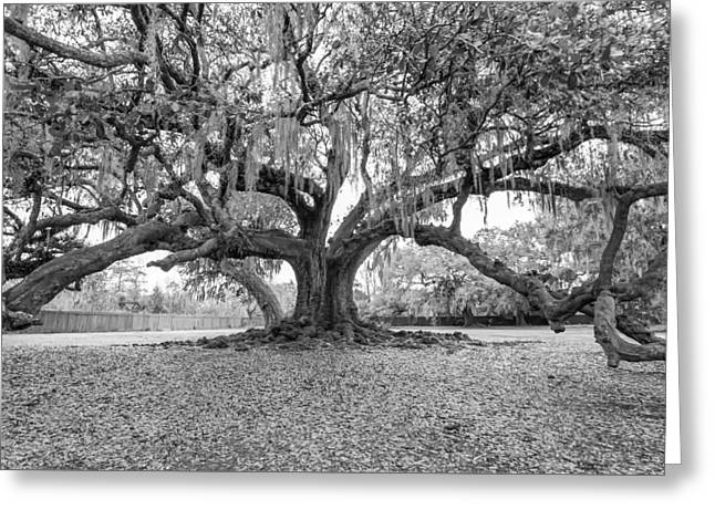 The Tree Of Life Monochrome Greeting Card by Steve Harrington