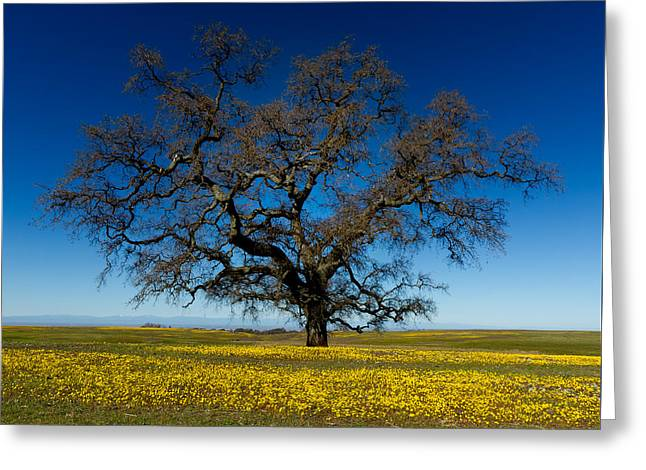 The Tree On Table Mountain Greeting Card