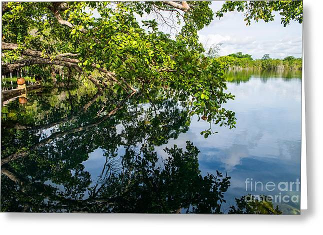 The Tree On The Cenote Greeting Card by Yuri Santin