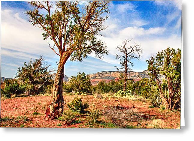 The Tree Sedona Secret Mountain Wilderness Greeting Card by Bob and Nadine Johnston