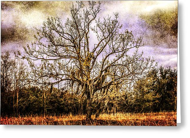 The Tree Greeting Card by Steven  Taylor