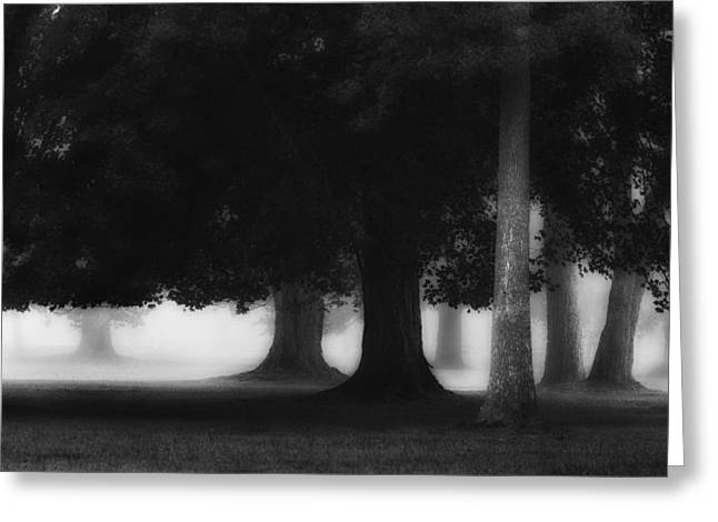 The Trees Greeting Card by Bill Wakeley
