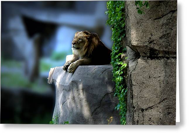 The True King Mr Lion Greeting Card
