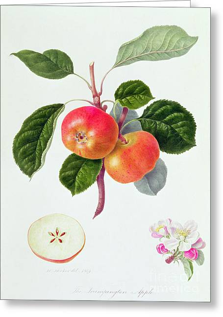 The Trumpington Apple Greeting Card