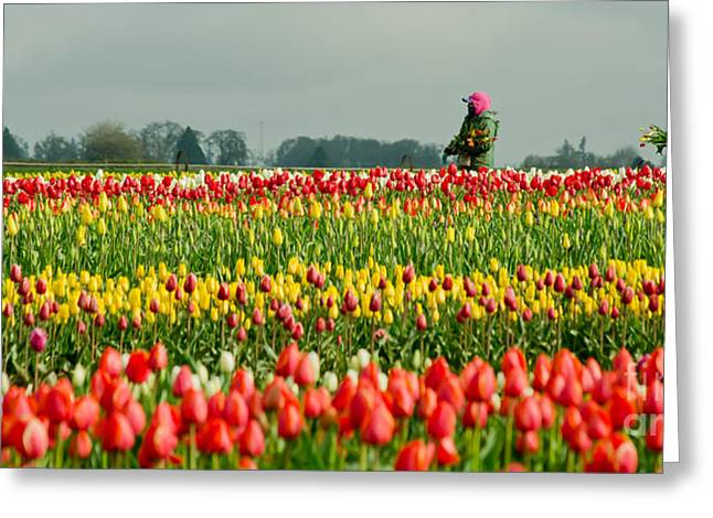 The Tulip Harvesters Greeting Card