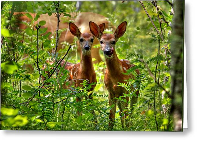 Greeting Card featuring the photograph The Twins by Larry Trupp