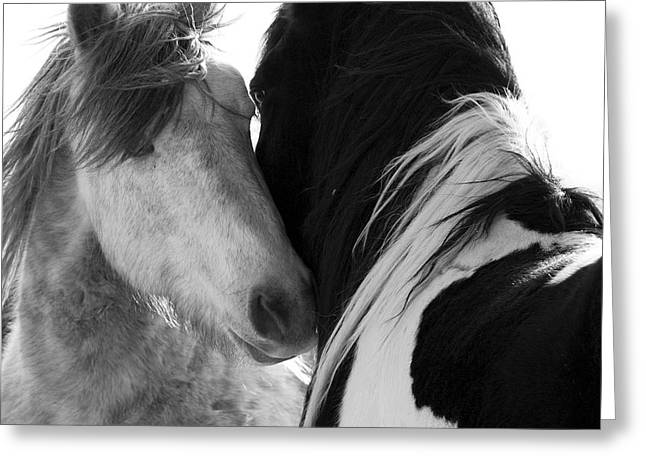 The Two Stallions Greeting Card