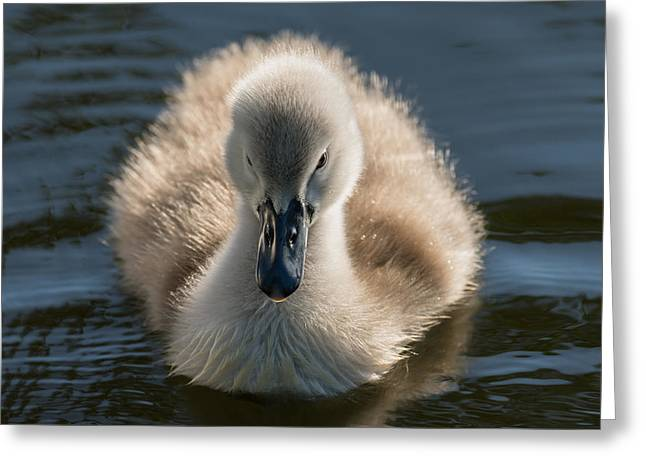 The Ugly Duckling Greeting Card by Michael Mogensen