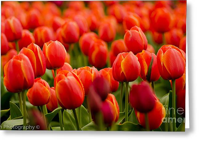 The Vibrant Ones Greeting Card by Nick  Boren