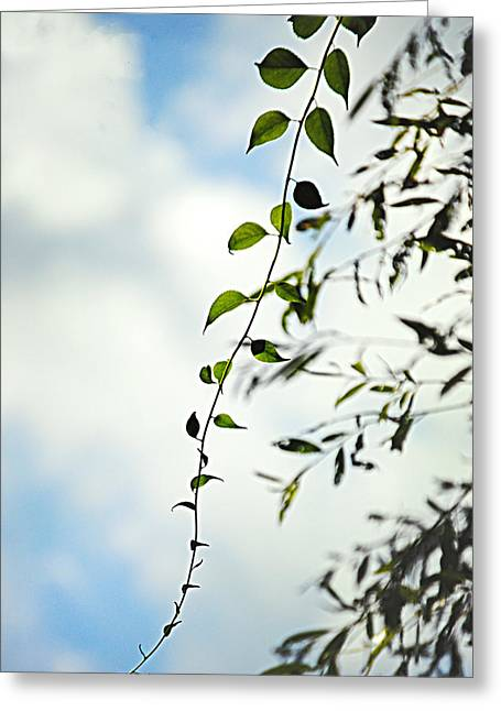 The Vine Greeting Card by Stephanie Grooms