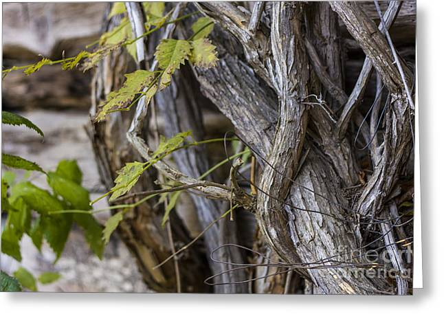 Greeting Card featuring the photograph The Vines by Amber Kresge