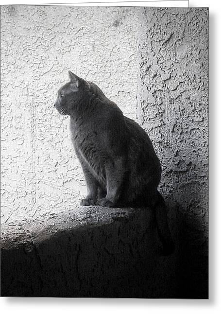 Greeting Card featuring the photograph The Visitor by Tammy Espino