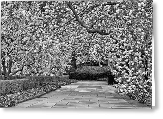 The Walk Bw Greeting Card by JC Findley