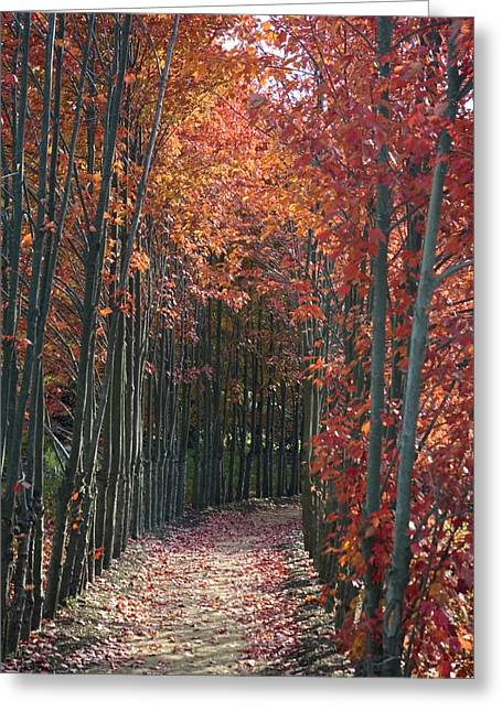The Wall Of Trees Greeting Card