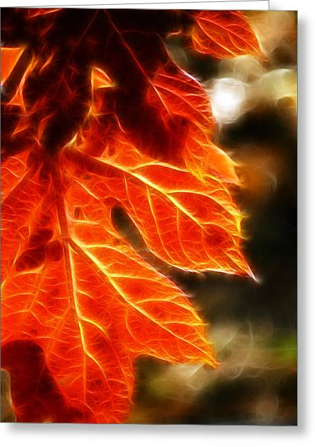 The Warmth Of Fall Greeting Card