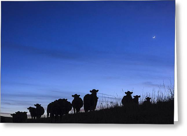 Greeting Card featuring the photograph The Watchers by Scott Bean