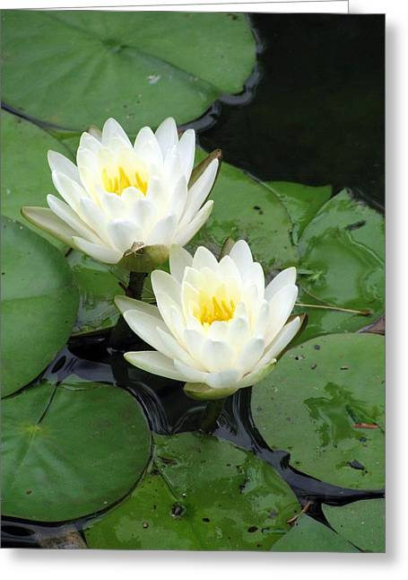 Greeting Card featuring the photograph The Water Lilies Collection - 07 by Pamela Critchlow