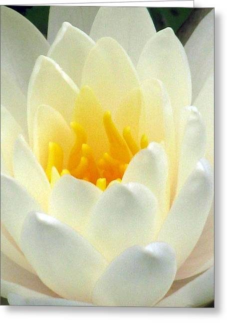 Greeting Card featuring the photograph The Water Lilies Collection - 10 by Pamela Critchlow
