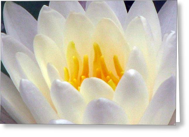 Greeting Card featuring the photograph The Water Lilies Collection - 11 by Pamela Critchlow