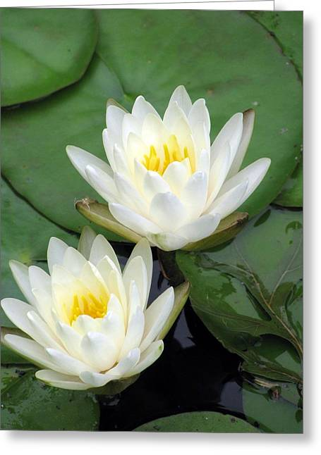 Greeting Card featuring the photograph The Water Lilies Collection - 12 by Pamela Critchlow