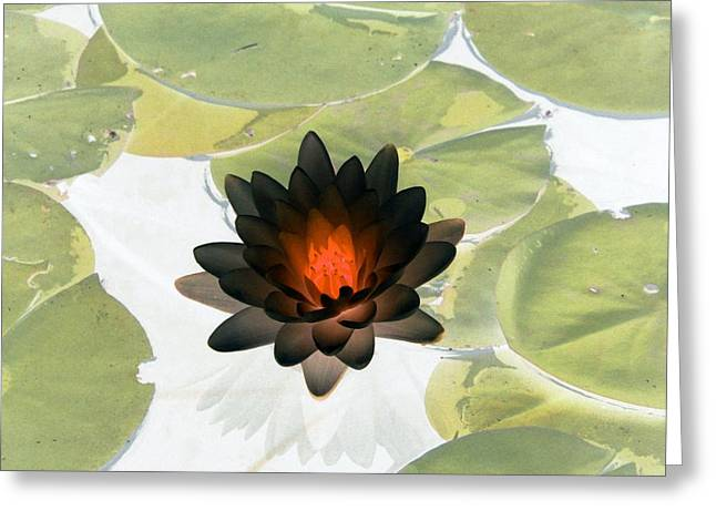 Greeting Card featuring the photograph The Water Lilies Collection - Photopower 1034 by Pamela Critchlow